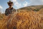 کاهش 26 درصدی صادرات محصولات کشاورزی در 9ماهه امسال