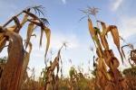 بخش کشاورزی نجاتبخش اقتصادهای کرونازده